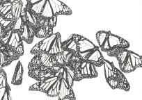 'Monarch 1', 2010, watercolour on 300gsm Arches, 14.9cm x 21.1cm
