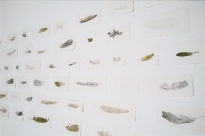'Feathers', 2006, watercolour on paper, variable dimensions