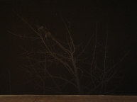 'Treescape Silhouette (Wall Drawing #7)', 2007, acrylic on wall, 360.5cm x 805.5cm, VCA Student Gallery